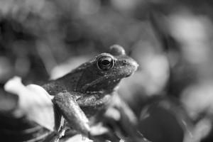 frosch_02